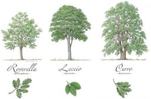 alberi-disegni